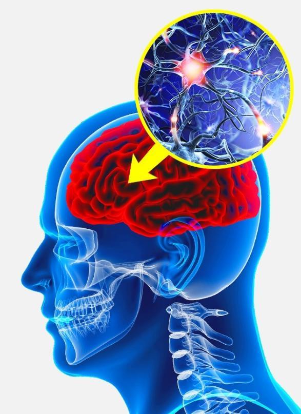 Alcohol usage damages mind cells
