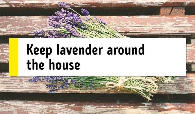 Maintain lavender around your house